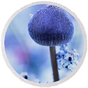 Frost Covered Mushroom, North Canol Round Beach Towel
