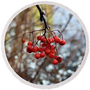 Frozen Mountain Ash Berries Round Beach Towel