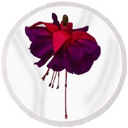 Fuchsia On White Round Beach Towel by Dawn OConnor