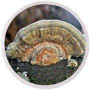 Fuzzy Turkey Tail Shelf Fungus - Trametes Ochracea Round Beach Towel