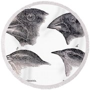 Galapagos Finches Round Beach Towel