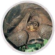 Galapagos Giant Tortoise Round Beach Towel