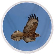 Galapagos Hawk Flying Round Beach Towel