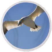 Gannet, Parc National De Round Beach Towel