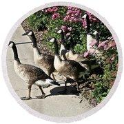 Garden Geese Parade Round Beach Towel