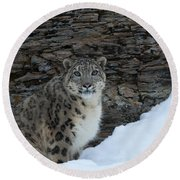 Gaze Of The Snow Leopard Round Beach Towel