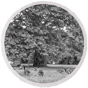 Geese By The River Round Beach Towel