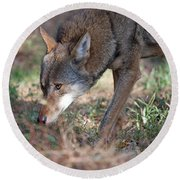 Gentle Wolf Round Beach Towel