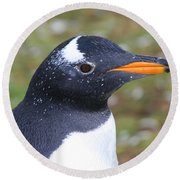 Gentoo Penguin Head Shot Round Beach Towel