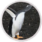 Gentoo Penguin With Something To Say Round Beach Towel