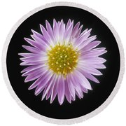Gerber Daisy In Black Background Round Beach Towel