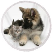 German Shepherd Dog Pup With A Tabby Round Beach Towel
