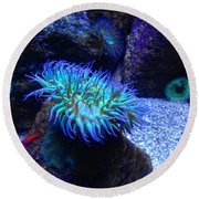 Giant Green Sea Anemone Round Beach Towel