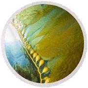 Giant Kelp, Catalina Island, California Round Beach Towel