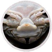 Giant Marine Isopod Round Beach Towel