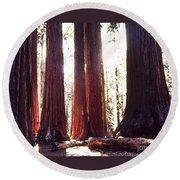 Giant Sequoia Round Beach Towel