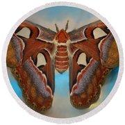 Giant Silk Moth Round Beach Towel