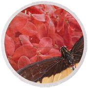 Giant Swallowtail - 3 Round Beach Towel