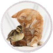Ginger Kitten And Mallard Duckling Round Beach Towel