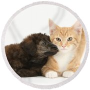 Ginger Kitten And Toy Poodle Round Beach Towel