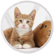 Ginger Kitten With Red Guinea Pig Round Beach Towel