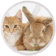 Ginger Kitten With Sandy Lionhead-cross Round Beach Towel