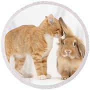 Ginger Kitten With Sandy Lionhead Rabbit Round Beach Towel