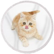 Ginger Kitten With Tongue Out Round Beach Towel