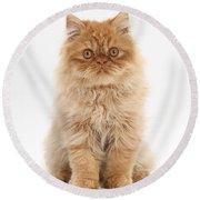 Ginger Persian Kitten Round Beach Towel