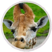 Giraffe In The Park Round Beach Towel