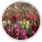 Gladioli Garden In Early Fall Round Beach Towel