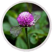 Globe Amaranth Bicolor Rose Round Beach Towel
