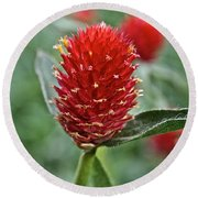 Globe Amaranth Round Beach Towel