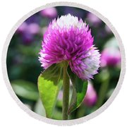 Glowing Globe Amaranth Round Beach Towel