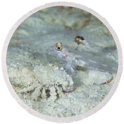 Goby With A Hermit Crab, Australia Round Beach Towel