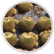 Golden Barrel Cactus 2 Round Beach Towel