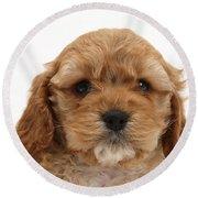 Golden Cockerpoo Puppy Round Beach Towel