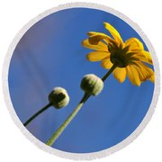 Golden Daisy On Blue Round Beach Towel