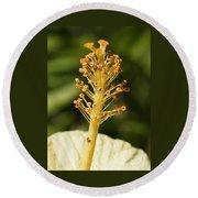 Golden Hibiscus Stamen Round Beach Towel