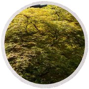 Golden Japanese Maple Round Beach Towel
