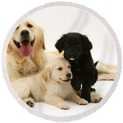 Golden Retriever And Puppies Round Beach Towel by Jane Burton