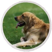 Golden Retriever Dog Laying In The Grass Round Beach Towel