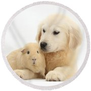 Golden Retriever Pup And Yellow Guinea Round Beach Towel by Mark Taylor