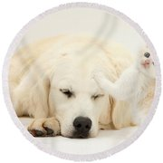 Golden Retriever With Two Kittens Round Beach Towel by Mark Taylor