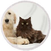 Goldendoodle And Chocolate Cat Round Beach Towel