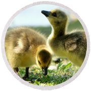 Goslings 6 Round Beach Towel