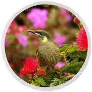 Graceful Honeyeater Round Beach Towel