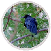 Grackle On A Branch Round Beach Towel