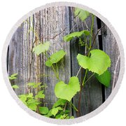 Grape Vines On An Old Barn Round Beach Towel