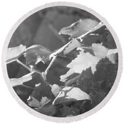 Grapevine In Morning Light Round Beach Towel